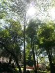 Sun coming through the trees