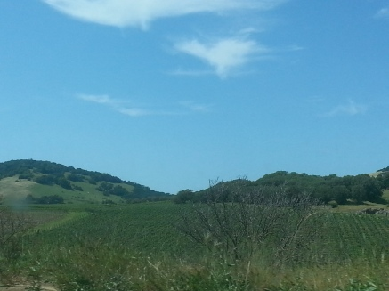 Wine Country California