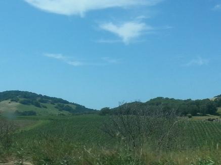 Wine Country California
