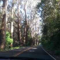 Winding through the trees